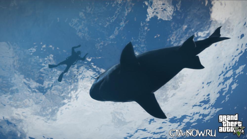 GTA 5 животные океана